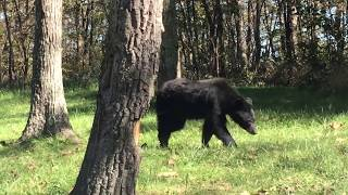 Welcome to Shenandoah National Park: Bear Country (Bear Encounters Included)