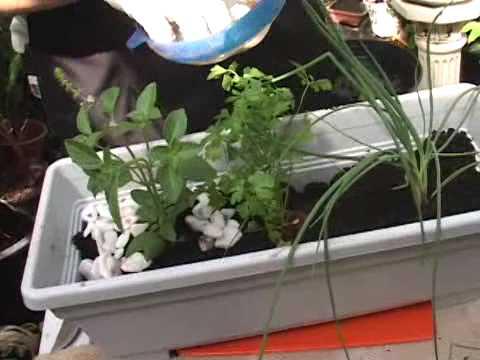 Como fazer uma horta em casa ou apartamento youtube for Como criar peces ornamentales en casa