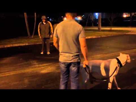 Dogo Argentino sahibi için ölümü bile göze alır