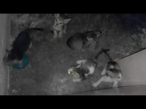 5 kittens crying for attention