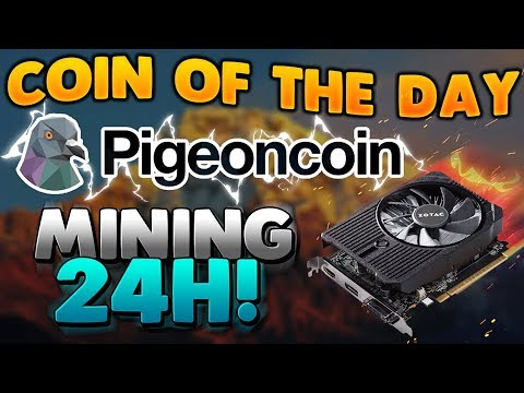 Mining Pigeon Coin for 24hrs coin of the day