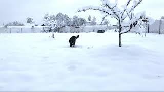 Чак - король зимы
