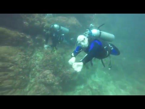 Costa Rica Diving Spring 2016