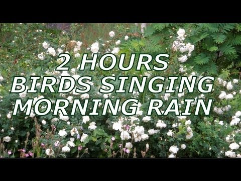 Relaxing 2 Hour Video of birds singing in the rain