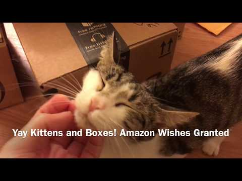 Yay Kittens and Boxes! Amazon Wishes Granted