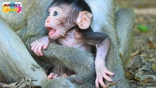 Flit newborn baby so cute so active want to play much|Fauna mom don't let him go|Monkey Daily 865