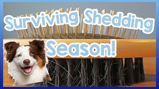 How to Stop Dogs Shedding! Dog Survival Kit: Moulting! - It's that ...