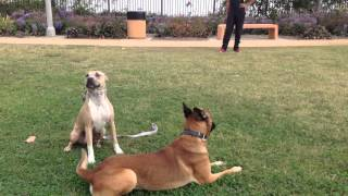 Dog Obedience Training Los Angeles, Orange County, San Diego | Sandlot K9 Services