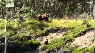 Deutsche Doku HD: Wenn die Wildnis ruft Keine Angst vor großen Bären Teil 2/2