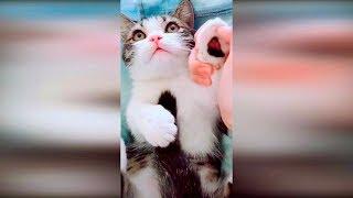 Смешные видео про котов 2019 Приколы с животными за февраль до слез #13 Самые смешные животные 2019