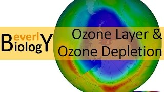 This quick video discusses the role of the ozone layer and how CFCs...