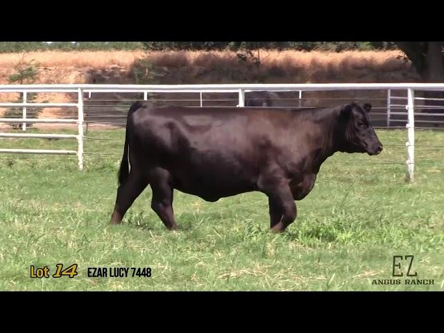 EZ Angus Ranch Lot 14