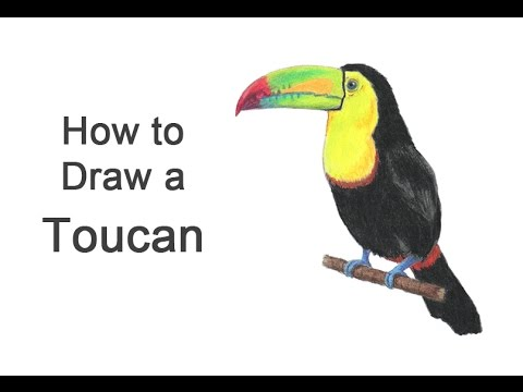 how to draw a toucan keelbilled youtube