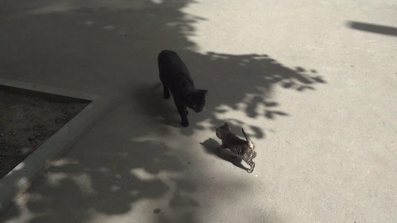 Маленький непослушный котенок и его кошка-мама носит ...