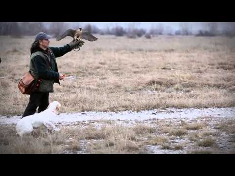 Trailer - International falconry meeting 2013 Vivaro - Italy