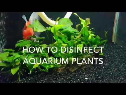 Disinfecting Aquarium Plants