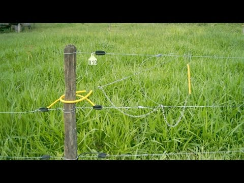 Curso Cerca Elétrica para Pastejo Rotativo - Vantagens e Desvantagens - Cursos CPT