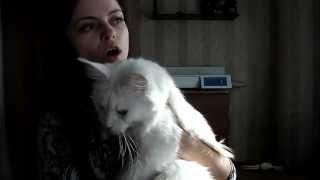 Вес мейн-кунов  , питомник ЛИРИКУМ  - потрясающе красивая кошечка Ангел Мой Красный ДАр  -