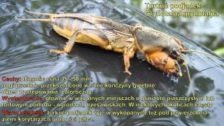 Owady Polski / Insect of Poland