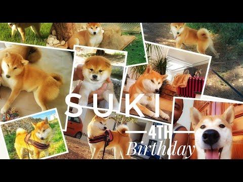 Happy 4th birthday SUKI (watch till the end!) Shiba Inu