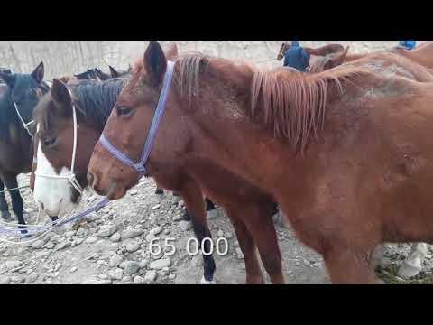 Фуркат ат базары 🐴 аттар, 28.01.18 🐎Скотный рынок, Фуркат  лошади, жеребцы