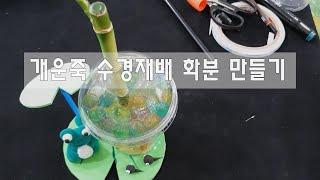 [아행공] 개운죽 수경재배 화분만들기