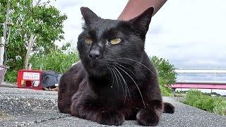 【地域猫】クロロが気持ち良くてハミングを歌う。【魚くれくれ野良猫】 thumbnail