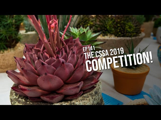 141 The Cactus and Succulent Society of Australia 2019 Competition