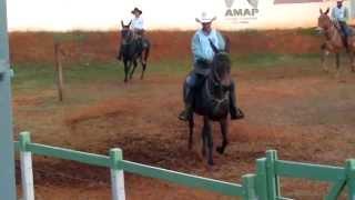 burro pulando concurso de marcha patos de minas-MG mulas rankeadas nacional