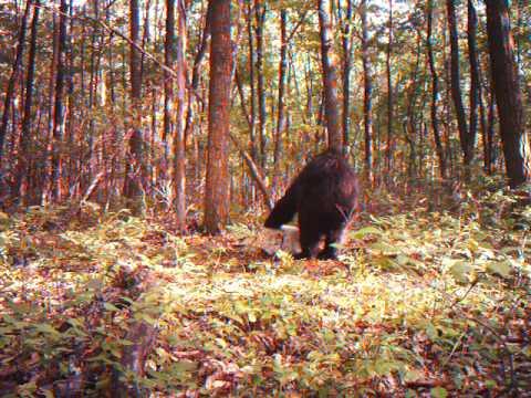 bear and deer vids mia lane 7 24 10 010