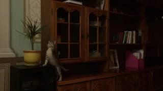 Горшок упал на кошку веселое видео кошка в порядке)