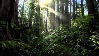 Chillstep Dubstep Forest Mix