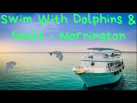 Swim With Dolphins & Seals - Mornington Peninsula, VIC, Australia / Tourist Attractions In Melbourne