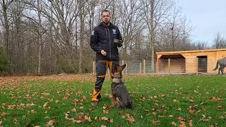 How to train your puppy to FOCUS HEEL  pt. 1 Flip Finish