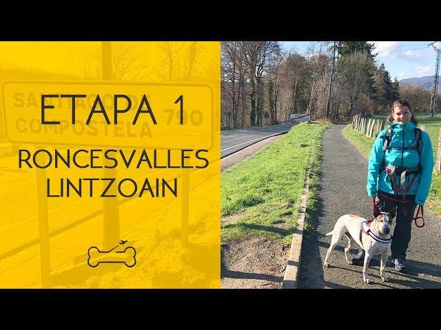 ETAPA 1: RONCESVALLES A LINTZOAIN | Camino de Santiago con perro