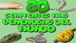 Las 20 Serpientes mas Venosas del Mundo part 2 HD