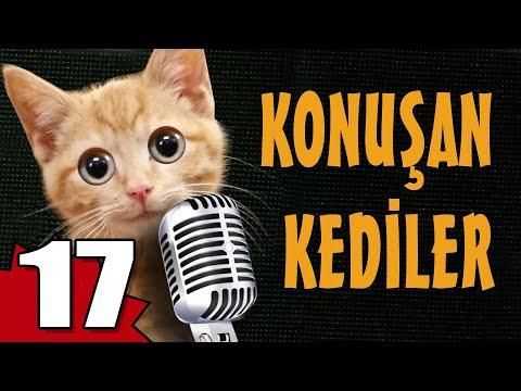 Konuşan Kediler 17 - En Komik Kedi Videoları