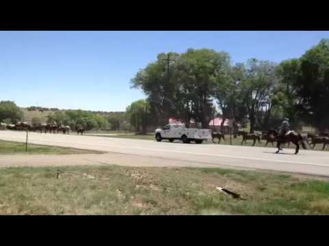 Horse drive through town