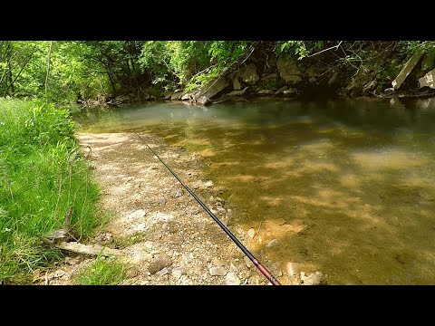 Ultralight ''Combat'' Creek Fishing (multi-species Everywhere)