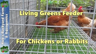 Chicken feeder, Living greens feeder for poultry or rabbits...