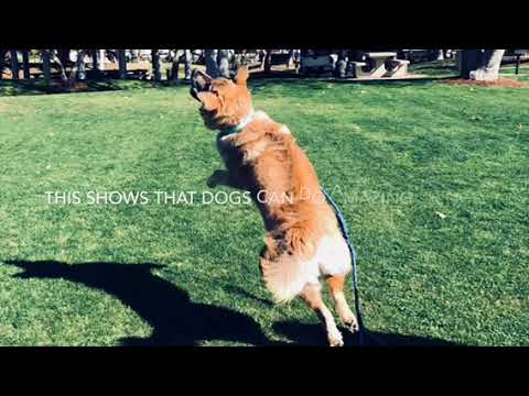 Circus Dog!!