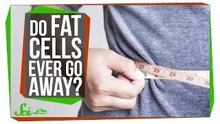 Do Fat Cells Ever Really Go Away?