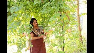 എൻ്റെ പൂന്തോട്ടം    My Garden in New York Mia Kitchen