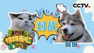 [正大综艺·动物来啦]猫咪比狗狗更能辨别气味的不同  CCTV