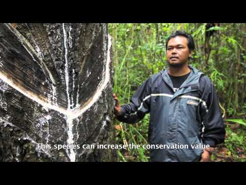 Non-Timber Forest Product: Indonesia's Forests Hidden Economy