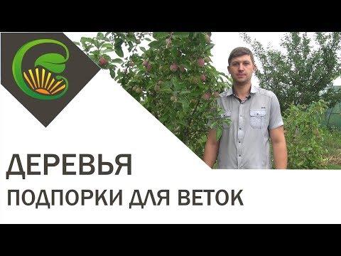 Делаем подпорки для плодовых деревьев