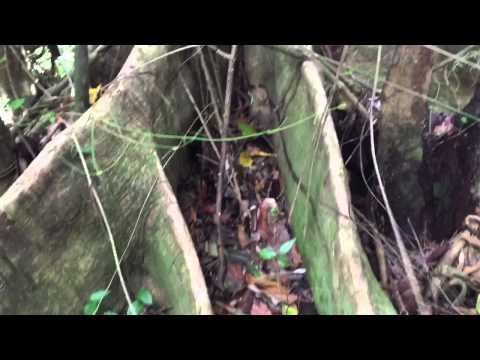 Tufton Hall Waterfall Hike in Grenada