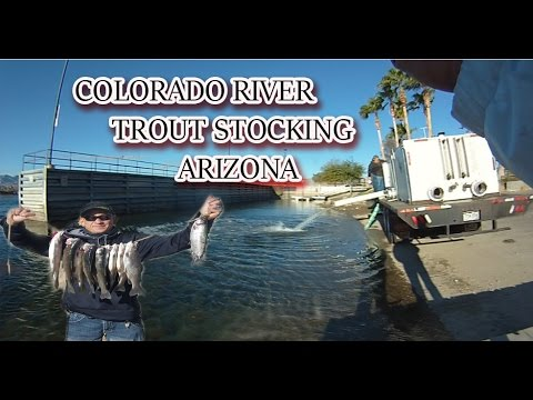 TROUT STOCKING THE COLORADO RIVER {5,000LBS OF TROUT}
