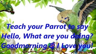 Video Teach your Parrot to say  Hello, What are you doing?  Goodmorning & I Love you! 4 hours download MP3, 3GP, MP4, WEBM, AVI, FLV Oktober 2018