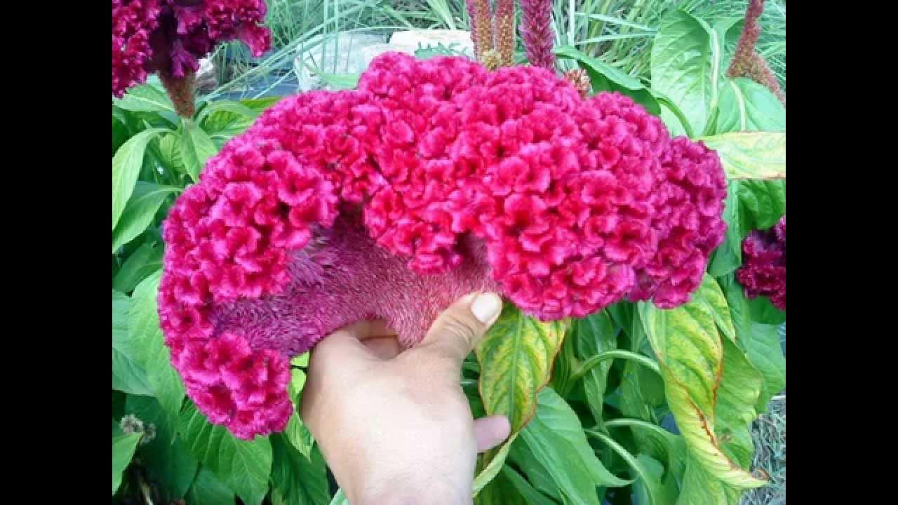 Hervorragend Les plus belles fleurs du monde (MOMO) - YouTube CA91